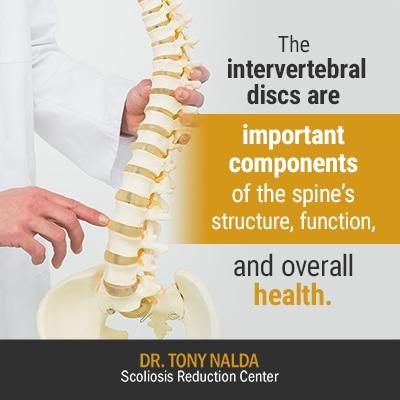 the intervertebral discs are 400