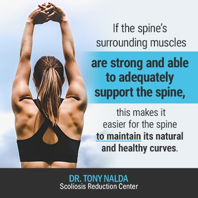 if the spines surrounding muscles 400